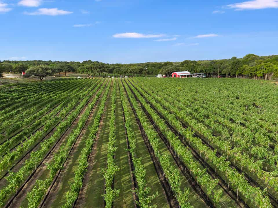 Limestone Terrace Vineyard